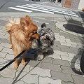 Photos: 天馬と春馬