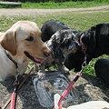 Photos: 昼ごはんに群がる犬達