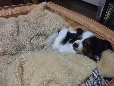 こんなでっかいベッドで寝てる♪