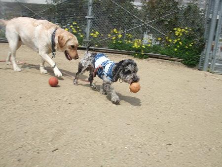 ボールを追っかけ