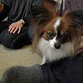 Photos: 先住犬のコロンちゃん