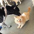 Photos: 猫さんこんにちわ
