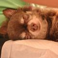 Photos: 眠れるわっくんです