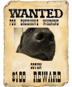 wantedposter2