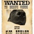 Photos: wantedposter2