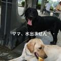 Photos: 水