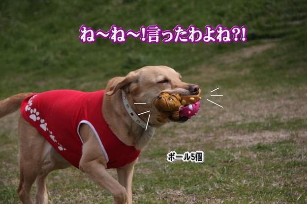 Photos: 言った?