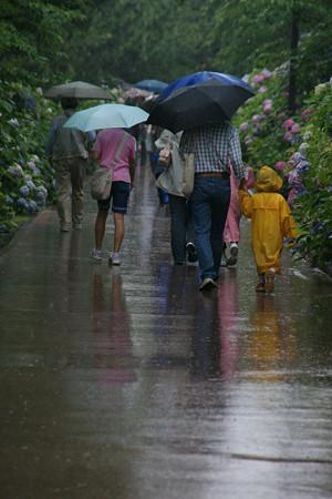 雨の紫陽花ロード0622m