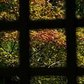 写真: 格子窓越しの紅葉0831
