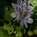 写真: 布袋の花も咲く0831