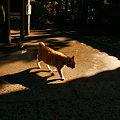 Photos: 猫が出迎える寺1210s