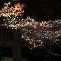 Photos: 初冬のモミジと二天門、妙本寺。