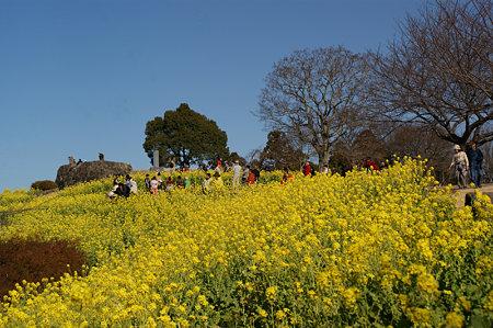 菜の花の展望台0103g