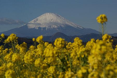 富士山0103f