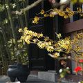 写真: マンサク咲く、経蔵前(2/14)。
