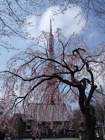 枝垂桜東京タワ0324x