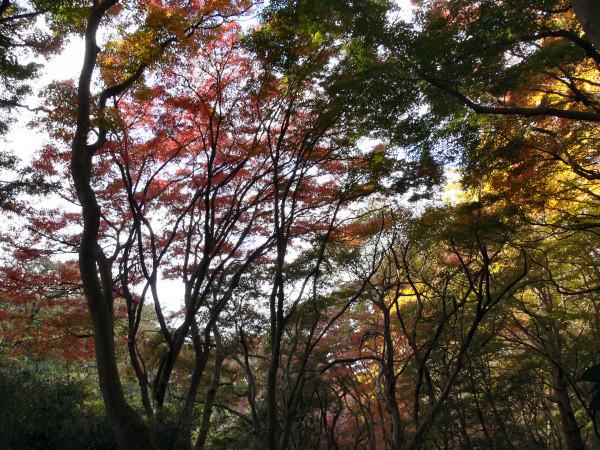 写真: 鎌倉獅子舞1201ta