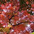 写真: 鎌倉獅子舞1201tb