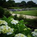 御庭の紫陽花