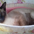 Photos: 猫少女アユです(ねこ)