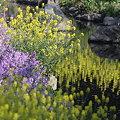 写真: 090414春の小川の岸辺