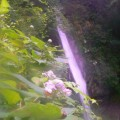Photos: P1220944花陰の奈良尾の滝