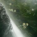 Photos: P1220928滝つぼ近くから撮影~濡れる~