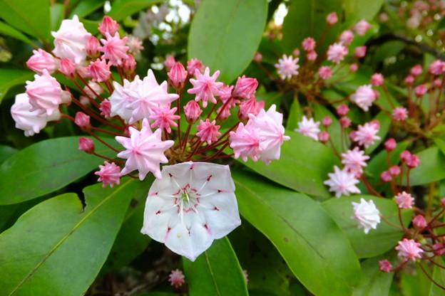 Photos: 公園で見かけた花。花弁の面...