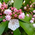 公園で見かけた花。花弁の面...