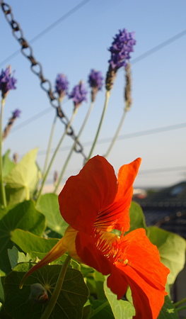 ナスタ1番花♪