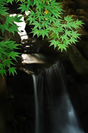 砧公園の滝