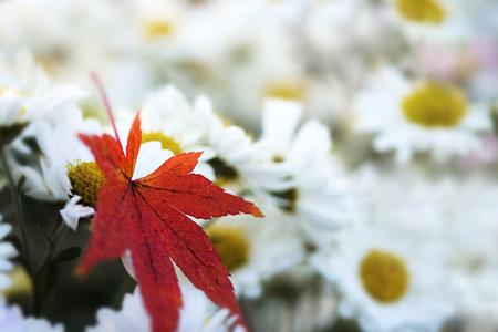 落葉と生花