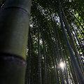 写真: 熊野と竹林