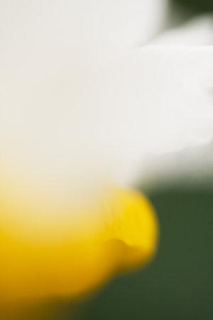 羽を持つ花