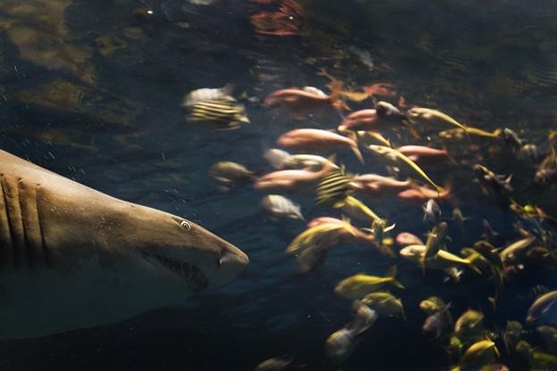 写真: JAWS