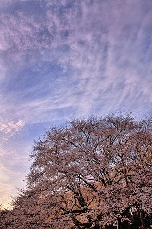 大空と大木