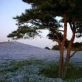 Photos: みはらしの丘
