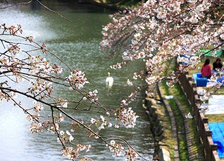 okazakizyou sakuramaturi-210328-14