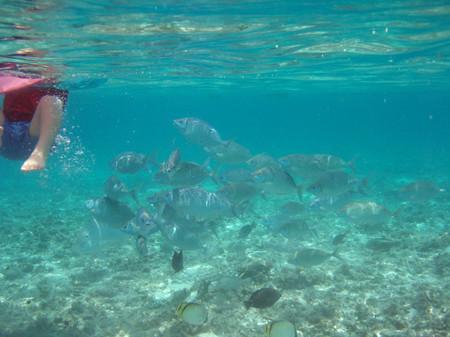 水納島で餌付けすると・・