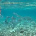 Photos: 水納島で餌付けすると・・