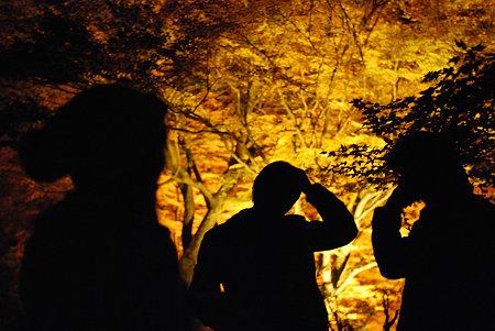 香嵐渓の影