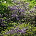 高取山麓の花