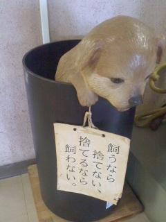 犬模型(6月2日、動物愛護センター)