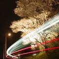 写真: 夜桜の下、光芒が疾る #ひたちなか海浜鉄道 #湊線 金上-中根 2014/04/19
