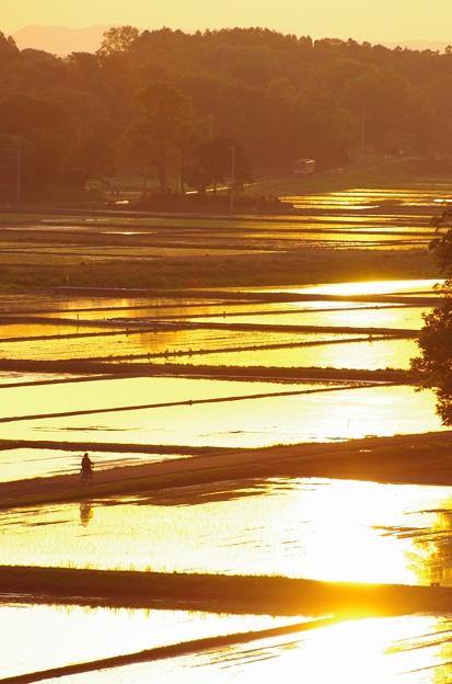 写真: 夕日に照らされ家路を急ぐ #ひたちなか海浜鉄道湊線 金上-中根 2014/05/10
