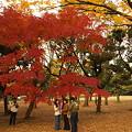 Photos: 代々木公園の森(その5)