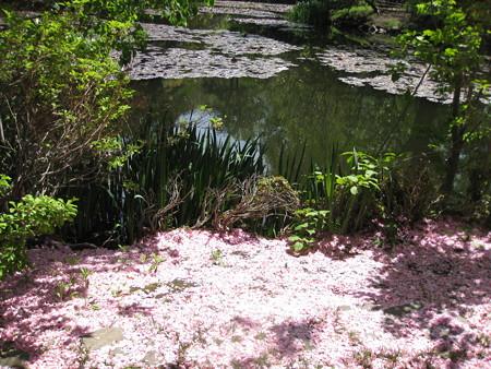 道庁の池とピンクのカーペット