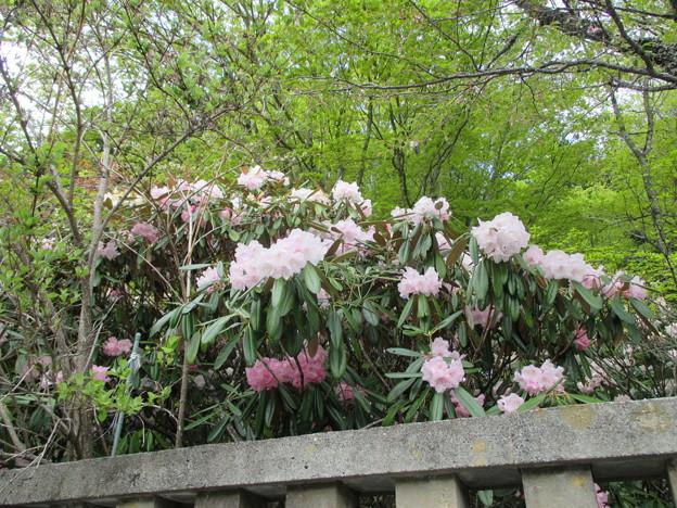 14.05.09.三峯神社(秩父市)