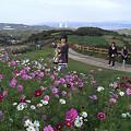 Photos: あわじ花さじき (2)