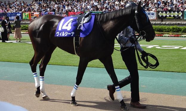 ヴィルシーナ(2回東京8日 11R 第9回 ヴィクトリアマイル(GI)出走馬)